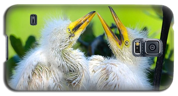 Hungry Egret Chicks Galaxy S5 Case