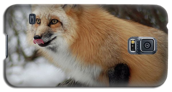 Galaxy S5 Case featuring the photograph Hungry Fox by Richard Bryce and Family