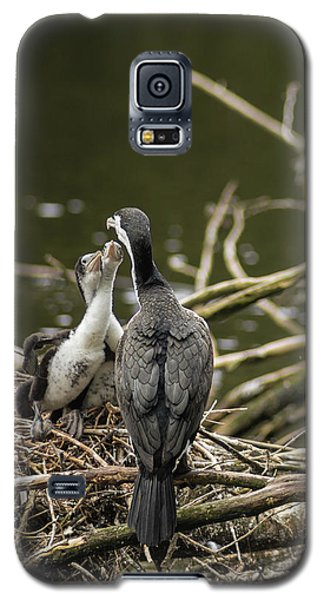 Hungry Pied Shag Chicks Galaxy S5 Case