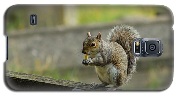 Hungry Squirrel Galaxy S5 Case