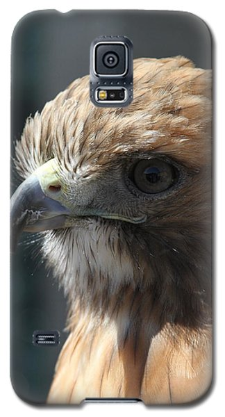 Galaxy S5 Case featuring the photograph Hunter's Spirit by Laddie Halupa
