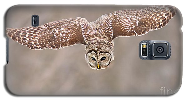 Hunting Barred Owl  Galaxy S5 Case by Mircea Costina Photography