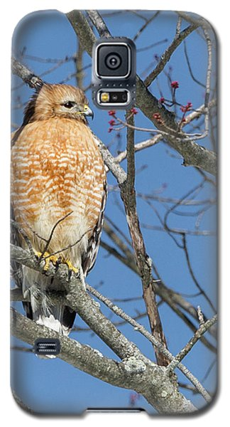 Galaxy S5 Case featuring the photograph Hunting by Bill Wakeley