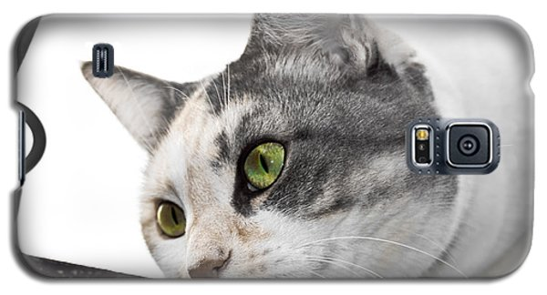 Galaxy S5 Case featuring the photograph Hunting Cat by Yurix Sardinelly