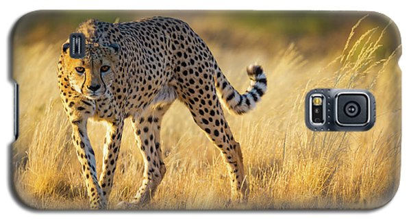 Hunting Cheetah Galaxy S5 Case by Inge Johnsson