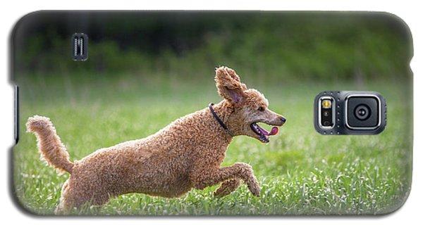 Hunting Dog Galaxy S5 Case