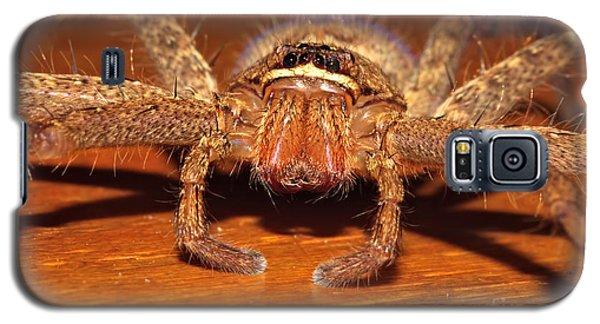 Huntsman Spider Galaxy S5 Case by Joerg Lingnau
