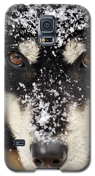 Husky And Snow Close-up Galaxy S5 Case