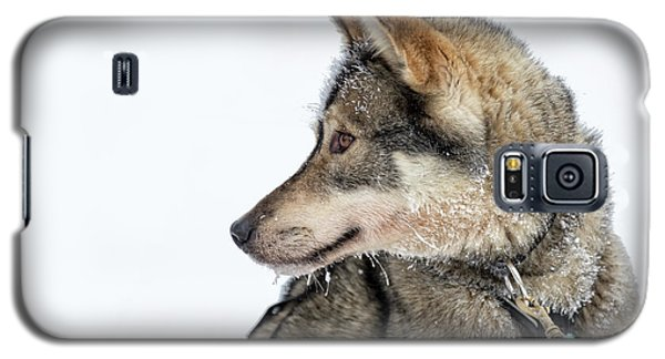 Galaxy S5 Case featuring the photograph Husky Dog by Delphimages Photo Creations