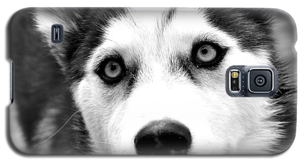Husky Pup Galaxy S5 Case by Sumit Mehndiratta