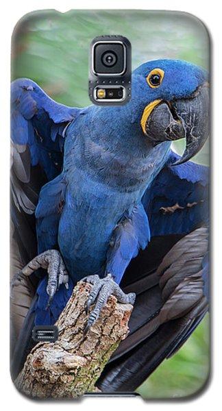 Hyacinth Macaw Galaxy S5 Case