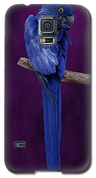 Hyacinth Macaw Panoramic Galaxy S5 Case