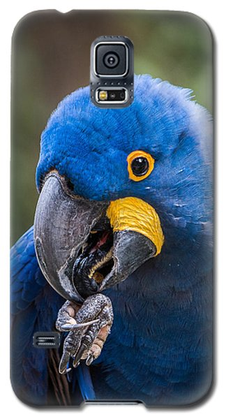 Hyacinth Macaw Galaxy S5 Case