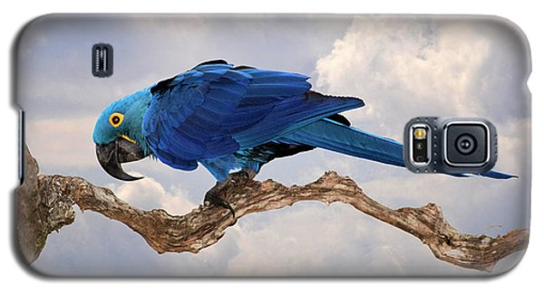 Galaxy S5 Case featuring the photograph Hyacinth Macaw by Wade Aiken
