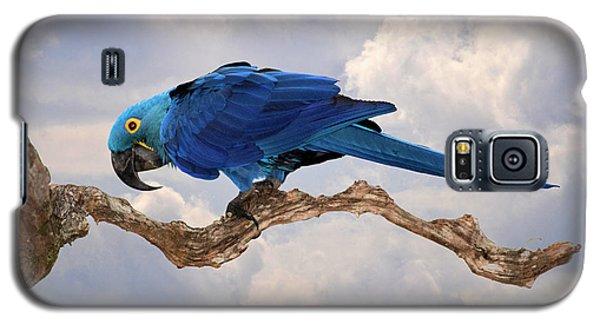 Hyacinth Macaw Galaxy S5 Case by Wade Aiken