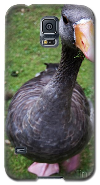 Hyde Park Goose Galaxy S5 Case