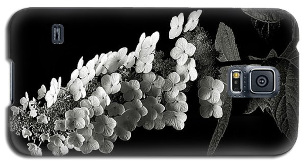 Hydrangea In Black And White Galaxy S5 Case