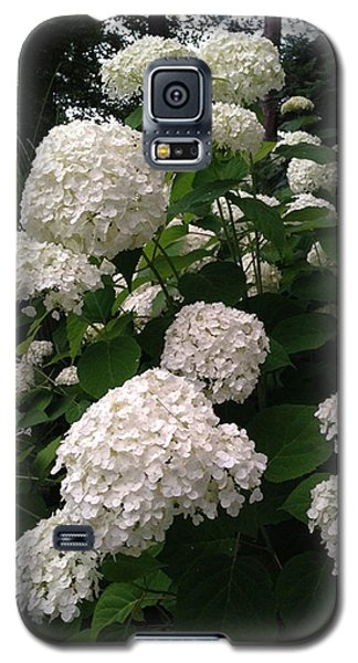 Galaxy S5 Case featuring the photograph Hydrangeas by Ferrel Cordle