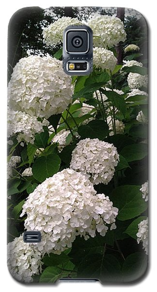 Hydrangeas Galaxy S5 Case by Ferrel Cordle