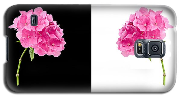 Hydrangeas On Black And White Galaxy S5 Case