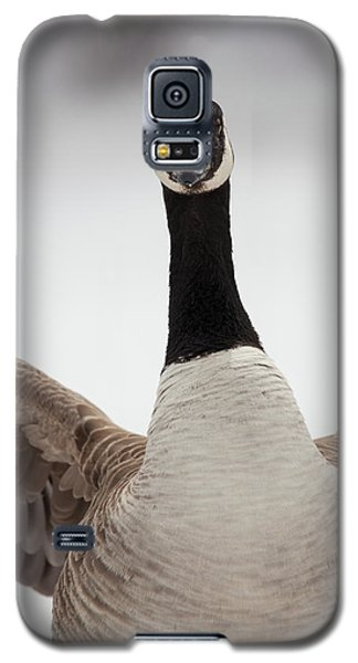 Galaxy S5 Case featuring the photograph I Am Coming After You by Karol Livote