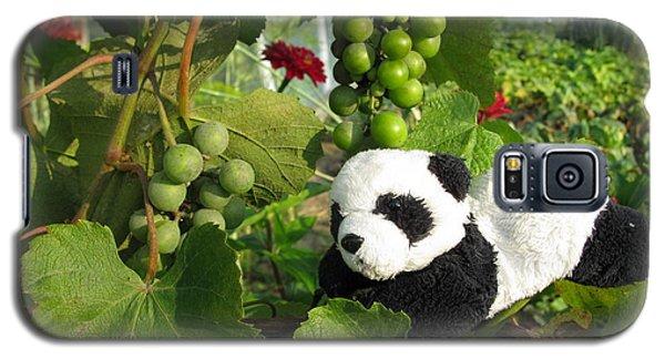 Galaxy S5 Case featuring the photograph I Love Grapes Says The Panda by Ausra Huntington nee Paulauskaite
