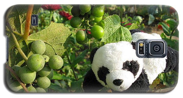 Galaxy S5 Case featuring the photograph I Love Grapes B by Ausra Huntington nee Paulauskaite
