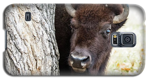 American Bison Peeks Around Tree Galaxy S5 Case