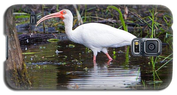 Ibis Drink Galaxy S5 Case by Mike Dawson