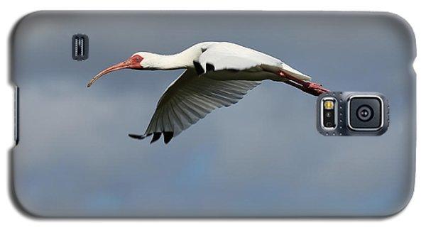 Ibis In Flight Galaxy S5 Case by Carol Groenen