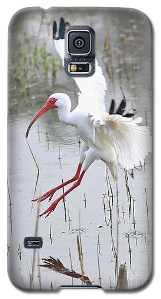 Ibis Soft Water Landing Galaxy S5 Case by Carol Groenen