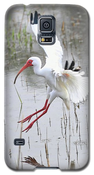 Ibis Soft Water Landing Galaxy S5 Case by Carol Groenen