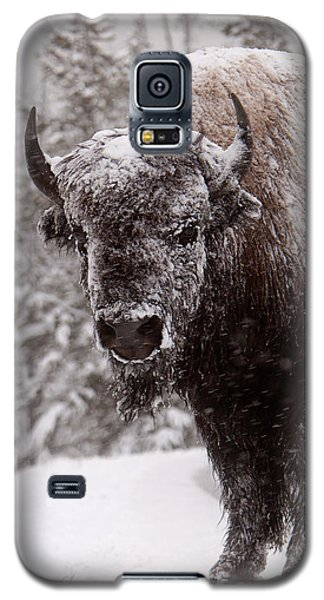 Ice Cold Winter Buffalo Galaxy S5 Case