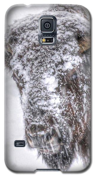 Ice Faced Galaxy S5 Case