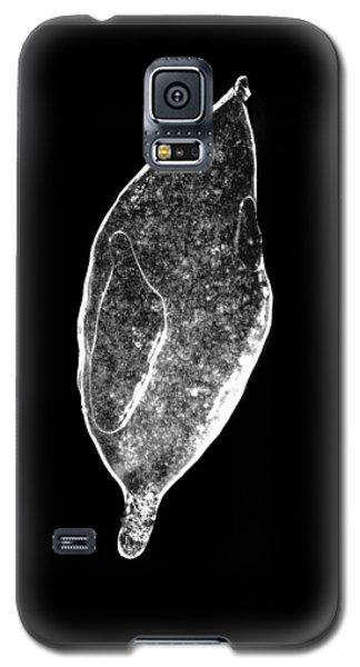 Ice Storm Leaf Galaxy S5 Case