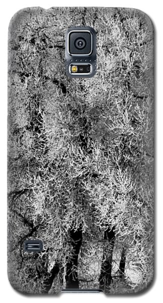 Iced Cottonwoods Galaxy S5 Case by Colleen Coccia