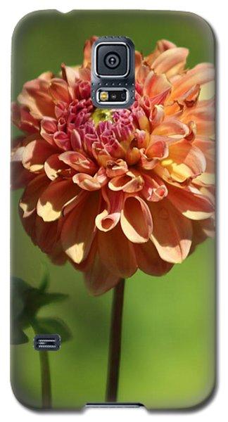Iced Tea Dahlia In Marzipan And Milano Tones Galaxy S5 Case