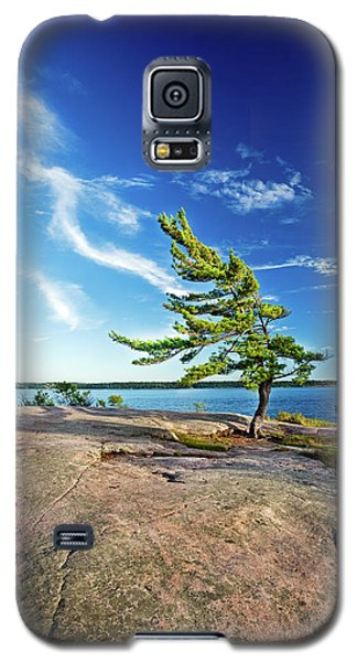 Iconic Windswept Pine Galaxy S5 Case