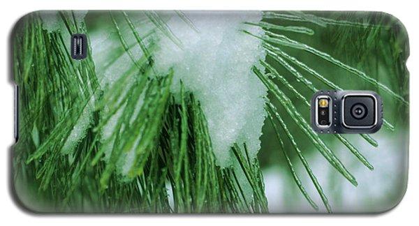 Icy Pine Needles Galaxy S5 Case