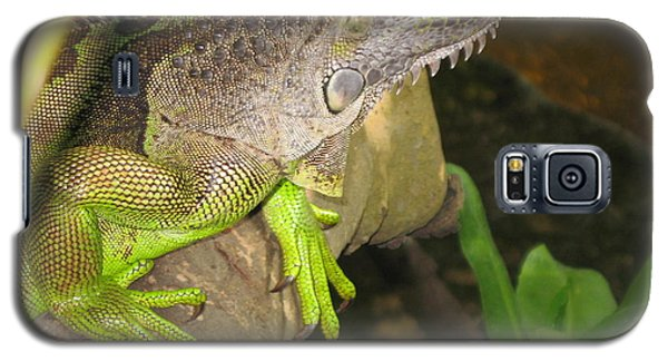 Galaxy S5 Case featuring the photograph Iguana - A Special Garden Guest by Christiane Schulze Art And Photography
