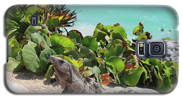 Galaxy S5 Case featuring the photograph Iguana At Tulum by Roupen  Baker