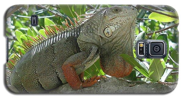 Iguana Daze Galaxy S5 Case by Nancy Taylor