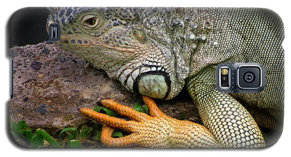 Galaxy S5 Case featuring the photograph Iguana by Jacqui Boonstra