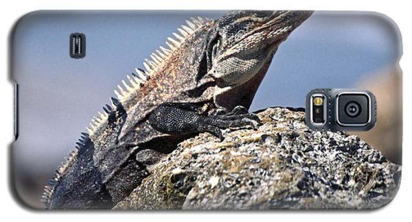 Galaxy S5 Case featuring the photograph Iguana by Sally Weigand