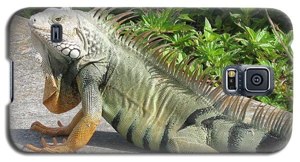 Galaxy S5 Case featuring the photograph Iguania Sunbathing by Christiane Schulze Art And Photography