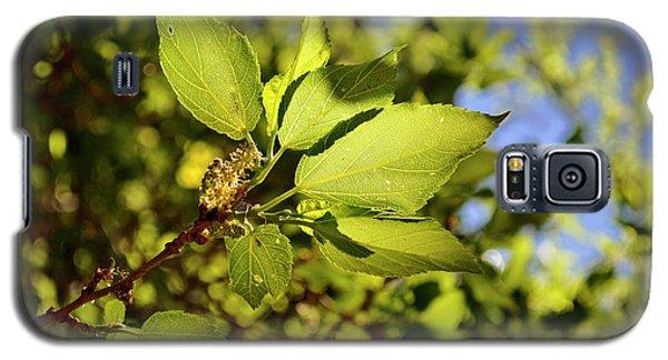 Illuminated Leaves Galaxy S5 Case