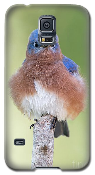 Galaxy S5 Case featuring the photograph I May Be Fluffy But I'm No Powder Puff by Bonnie Barry