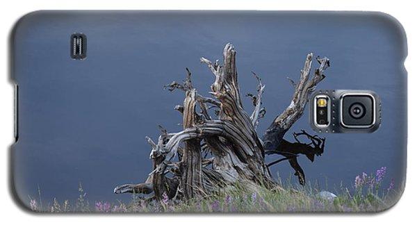 Stump Chambers Lake Hwy 14 Co Galaxy S5 Case