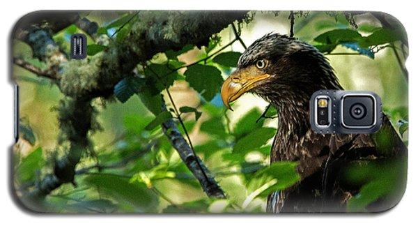 Juvenile Bald Eagle Galaxy S5 Case