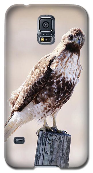 Immature Red Tailed Hawk Galaxy S5 Case